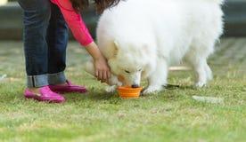 Feed a dog Stock Photos