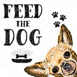 Feed the dog. Vector illustration with hand drawn lettering and dog on texture background. Inscriptions for dog lovers. Painted brush lettering. Custom Royalty Free Stock Photo