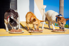 Feed the dogs Royalty Free Stock Photos