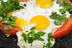 Feed eggs and tomato Royalty Free Stock Image