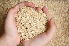Feed the Hungry, With Love. A child's hands holding grains of rice, readily willing to give to the poor and hungry with pure love stock photography