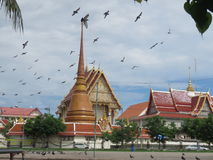 Feed the pigeons opposite the temple  the royal monastery. Royalty Free Stock Photo