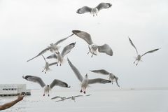 Feed the seagulls by hand on dayligth royalty free stock images
