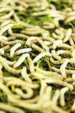 Feed silkworms eating Royalty Free Stock Images