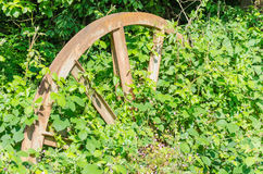 Feed wheel, colliery in the forest floor. Old wheel of a coal mine conveyor system almost overgrown stuck in Waldboden.Die nature to bring everything back Stock Image