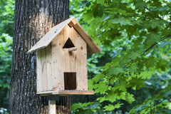 Feeder, birdhouse in a tree in the woods or park. Royalty Free Stock Photos