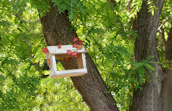 Feeder for birds and squirrels in the Botanical garden Royalty Free Stock Photo