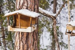 Feeder for birds in the winter forest stock photo