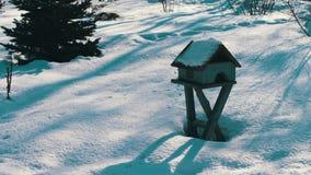 Feeder for birds in winter park stock video