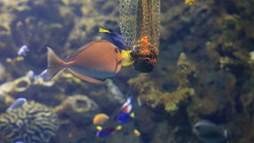 Feeder with delicacy for fish in saltwater stock video footage