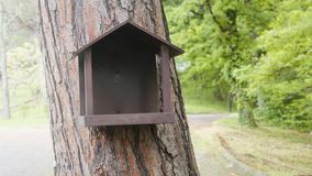Feeder for squirrels. In the pine tree in summer stock images
