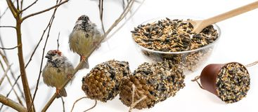 Feeders for birds from seeds and sparows Stock Images