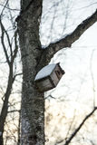 Feeders for birds winter in the park. Hanging on the branches of the tree Stock Photo