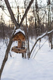 Feeders for birds winter in the park. Hanging on the branches of the tree Stock Photos