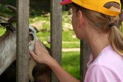 Feeding animals Royalty Free Stock Image