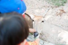 Feeding an antelope Royalty Free Stock Photo