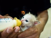 Feeding Baby Cats The milk in the bottle. Feeding Baby Cats The milk in the bottle is similar to the infant who drinks milk from the bottle Stock Image
