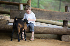 Feeding Baby Goat Royalty Free Stock Images