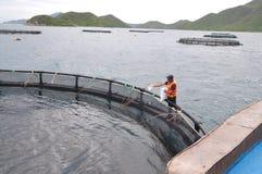 Feeding barramundi fish in cage culture in the Van Phong bay in Vietnam Stock Photos