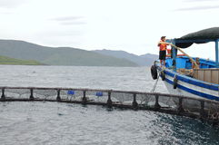 Feeding barramundi fish by machine in cage culture in the Van Phong bay in Vietnam Stock Images