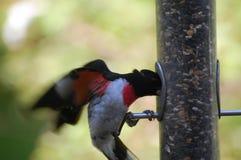 Feeding bird Stock Images