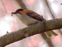 Feeding bird on branch Stock Image