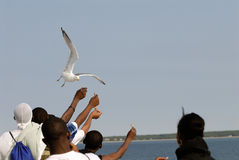 Feeding the bird Royalty Free Stock Photography