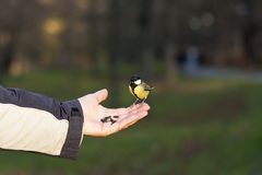 Feeding a bird on hand Stock Photography