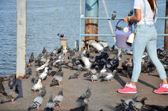 Feeding Bird at river front of the Nonthaburi temple Royalty Free Stock Photography
