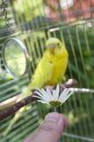 Feeding A Bird Stock Photos