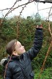 Feeding the birds royalty free stock photo