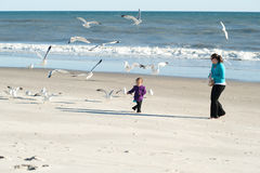 Feeding birds. Child playing at beach and feeding birds Stock Images