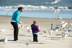 Feeding birds royalty free stock photo