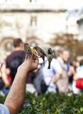 Feeding the birds Stock Images