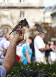 Feeding the birds Royalty Free Stock Photos