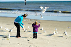 Feeding birds at the beach Stock Image