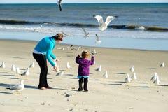 Feeding birds at the beach Stock Image