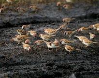 Feeding of birds Royalty Free Stock Images