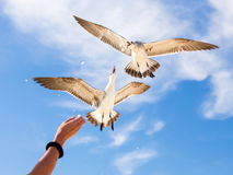Feeding birds Stock Image