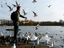 Feeding birds in Hyde park,London Stock Images