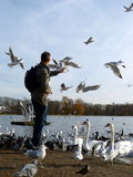 Feeding birds in Hyde park,London Stock Photo