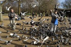 Feeding the birds in Hyde Park,London,UK. Man feeding the birds by the Serpentine in Hyde Park,London Royalty Free Stock Photo