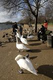 Feeding the birds in Hyde Park,London,UK. PPeople feeding the birds by the Serpentine in Hyde Park,London Stock Photo
