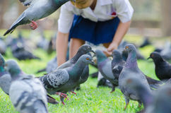 Feeding birds inthe park.. Royalty Free Stock Photos