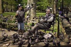 Feeding the Birds,  New York City Stock Photos