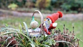 Feeding birds outside, winter, fodder in a basket stock footage