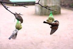 Feeding birds. Birds are feeding in a public garden Stock Image