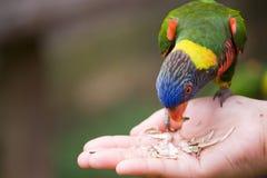 Feeding birds series 2 Royalty Free Stock Image