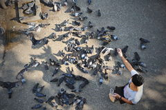 Feeding Birds Stock Photography