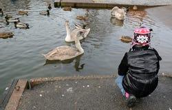 Feeding birds in winter Royalty Free Stock Photos